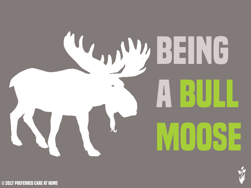 Being A Bull Moose